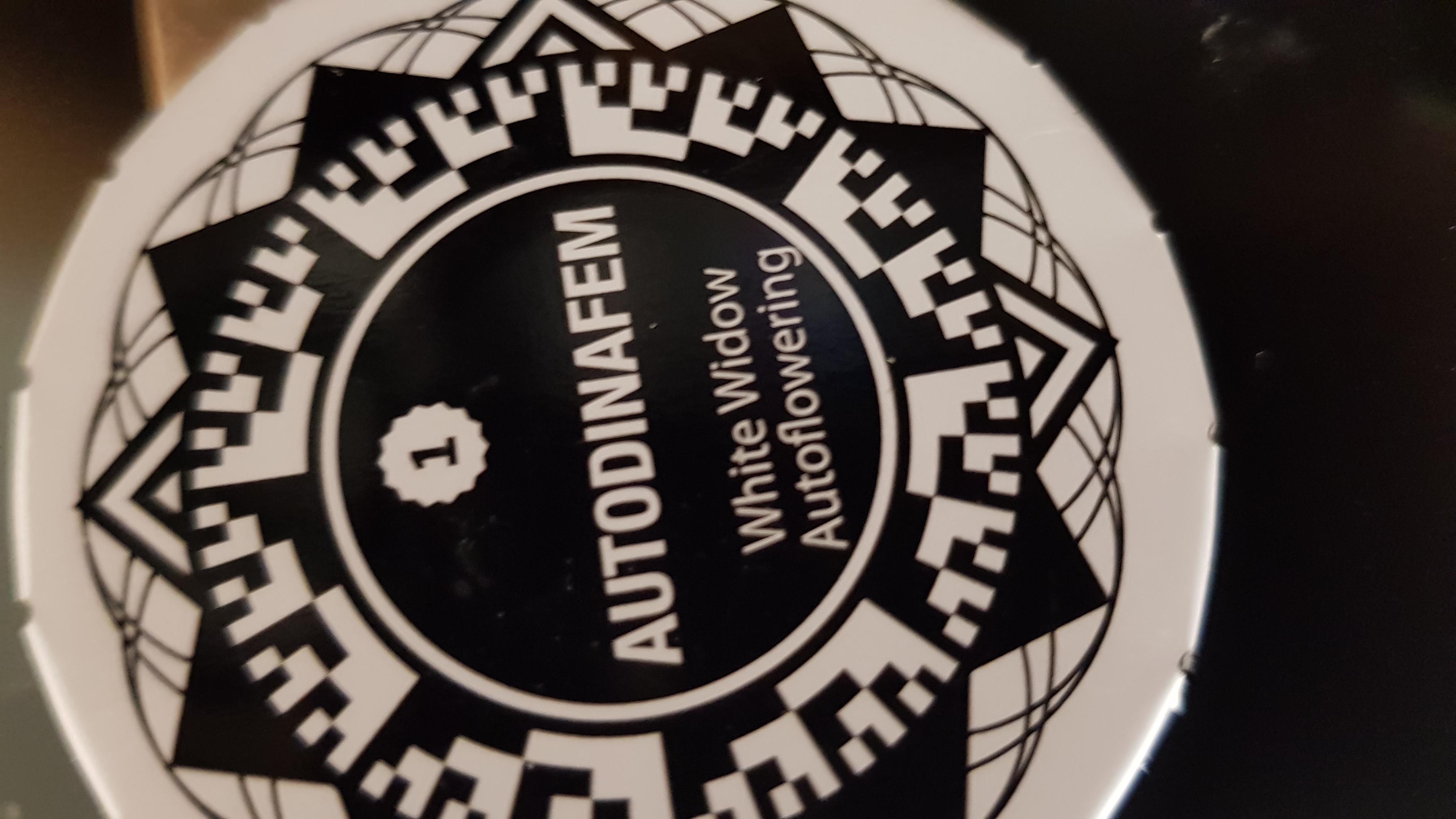 White Widow Autoflowering 🕷