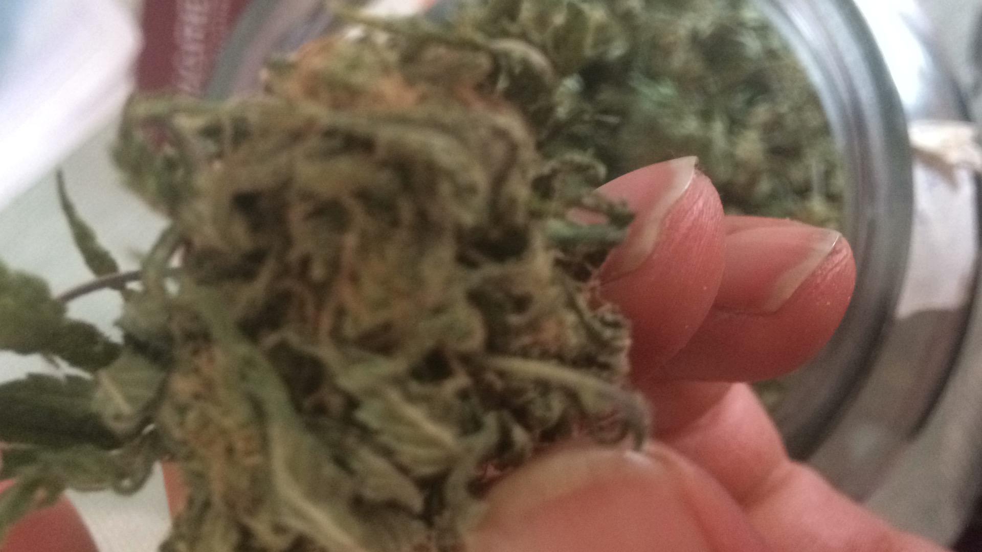 Buy Critical Jack Feminized Cannabis Seeds