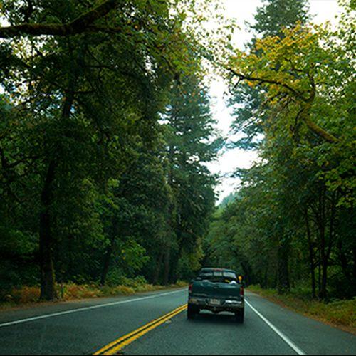 Carretera entre secuoyas