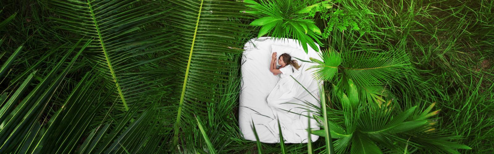 Dormir Sueño Dinafem Seeds