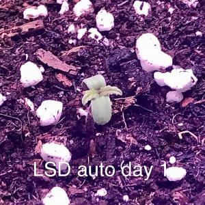 Photo of LSD Auto by Samdo
