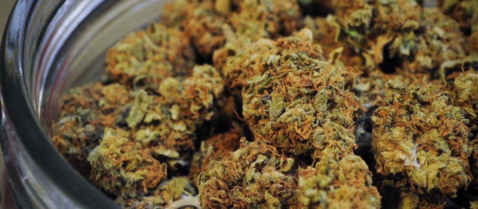 los-6-países-más-avanzados-en-la-investigación-de-la-marihuana-medicinal