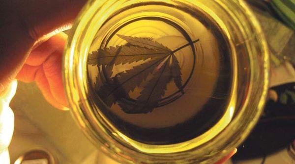 huile olive cannabique cbd
