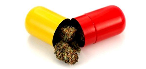 deutschland k ndigt die legalisierung von cannabis f r chronisch und schwer kranke patienten an. Black Bedroom Furniture Sets. Home Design Ideas