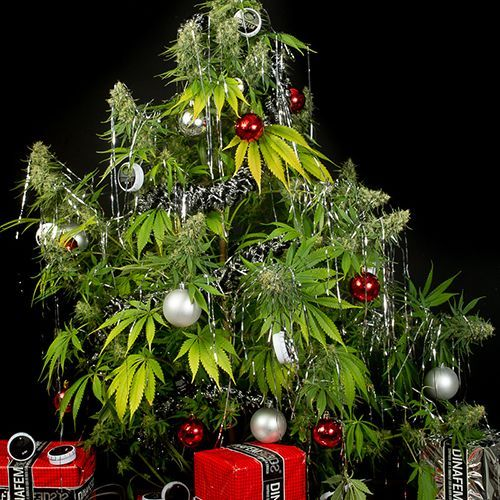 Cannabis Christmas Songs - Purple Orange CBD for Christmas