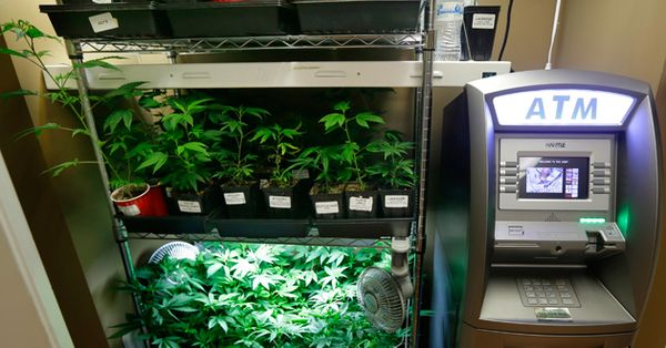 banks cannabis business