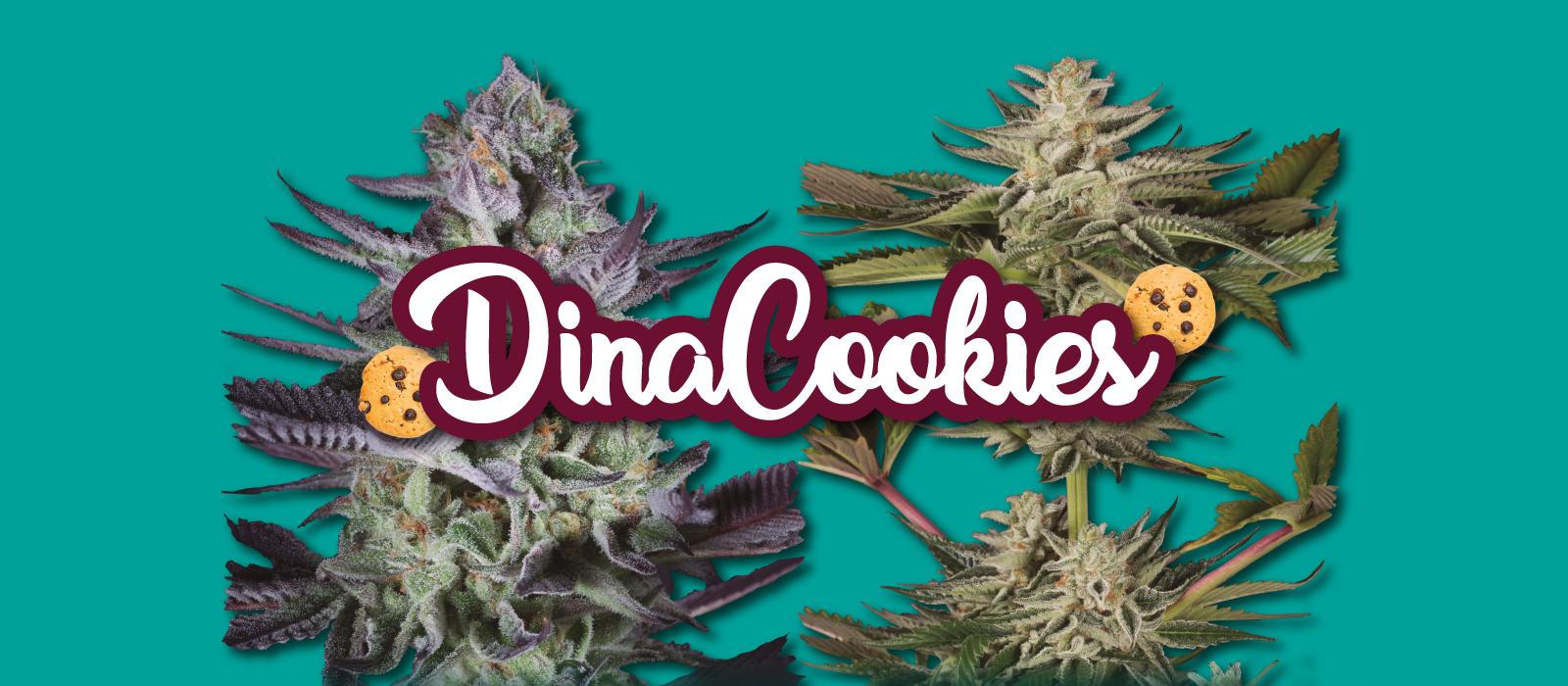 Banner Cookies 2019