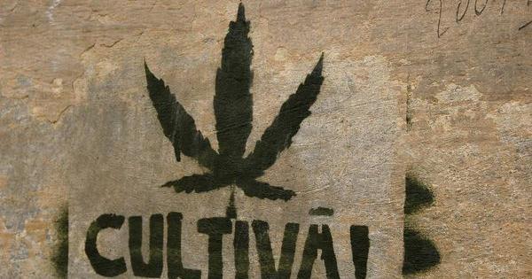 barcelona clubs cannabis
