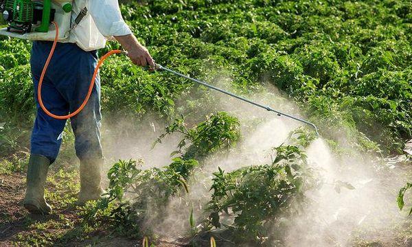 bataille pesticides cannabis etats unis