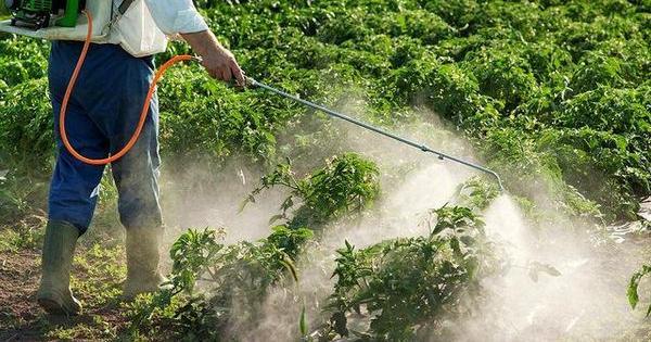 battaglia pesticidi marijuana statiuniti