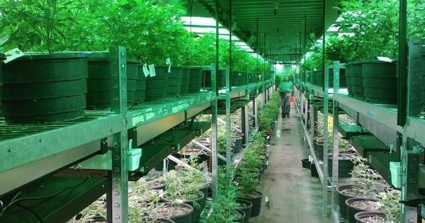 buon momento investire marijuana