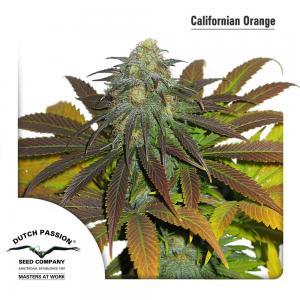 how to buy marijuana seeds in california