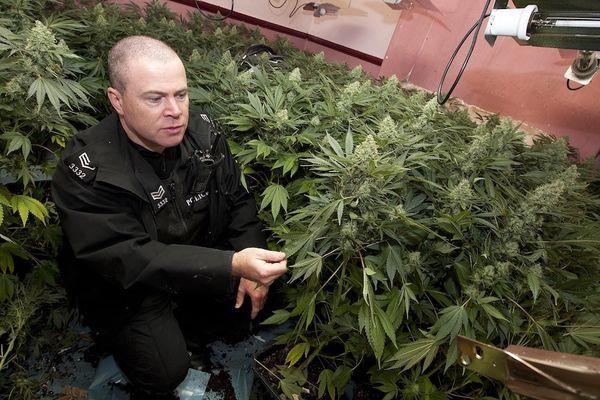cannabis iles britanniques