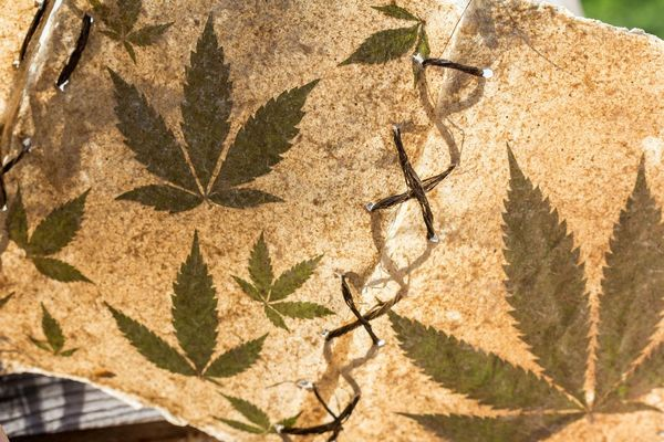 cannabis historia principal