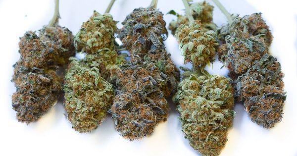 cbd benzodiacepinas marihuana