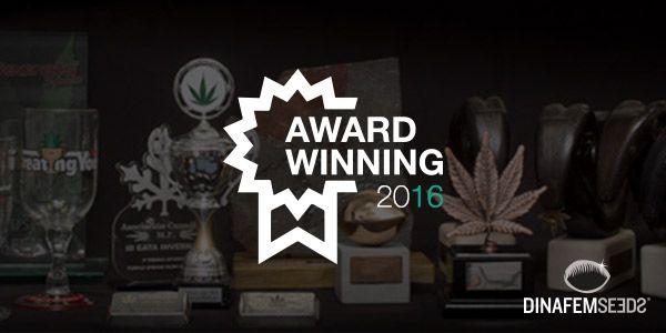 championes 2016 genetiques marijuana cannabis