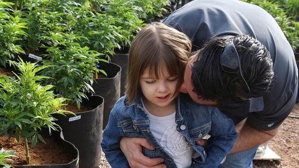 charlotte web cannabis