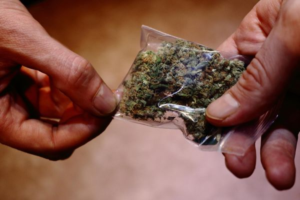cifras mercado laboral cannabis