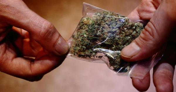 cannabis labour market