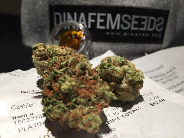 colorado marijuana revolution
