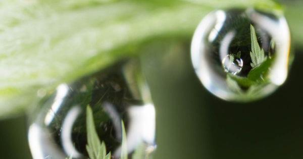 cultivar autoflorecientes balcon exterior