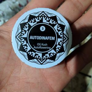 Photo of OG Kush Autoflowering by Infernal