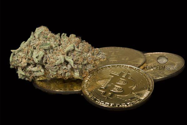 cannabis-y-criptomonedas-ahora-es-el-momento