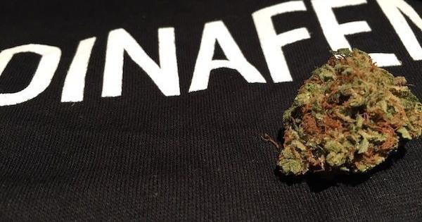 dinafem cannabis cup denver first time