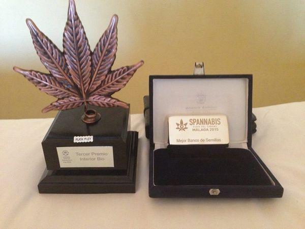 dinafem mejor banco semillas spannabis 2015