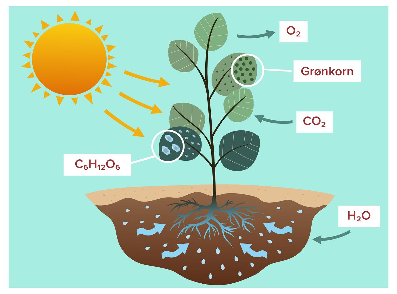Air circulation for cannabis growing