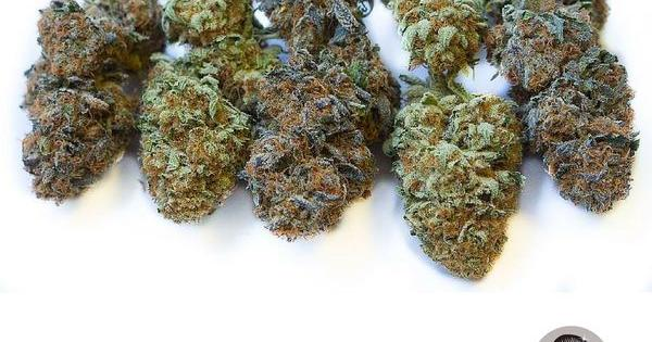 el secado curado cogollos frescos cannabis