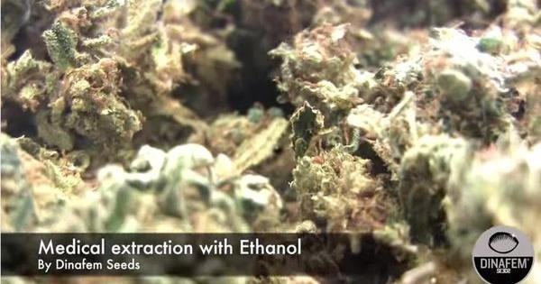 Estrazione olio canapa ricco CBD con etanolo