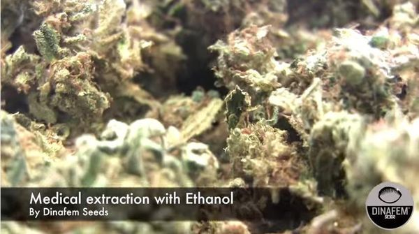 Extraction of cannabis oil rich CBD with pure