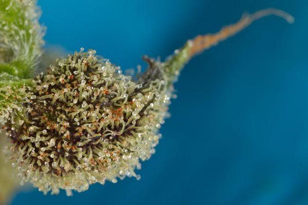 happiness cannabinoids part1