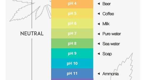 How to regulate the pH balance of your cannabis growing medium