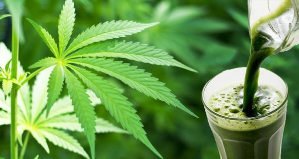 preparare succo fresco marijuana