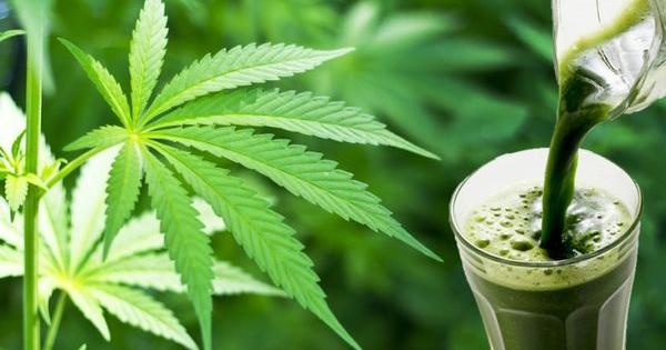 make fresh cannabis juice