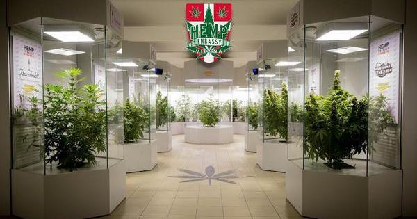 Hemp Embassy museo Viena cannabis