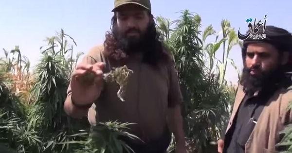 isis contro coltivazione marijuana