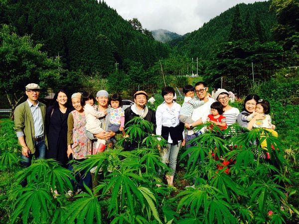 cannabis medical japan