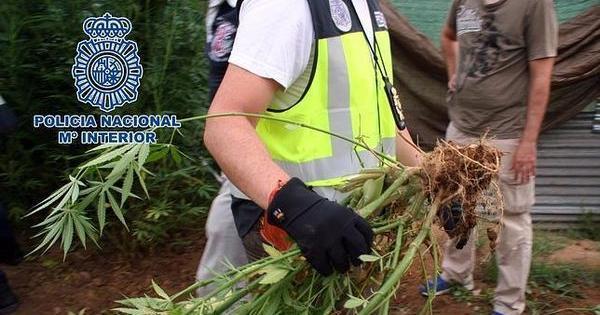 legalization marijuana in spain