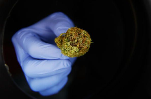 marihuana ebola