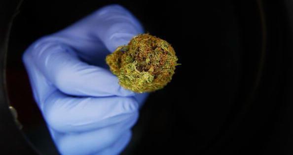 marijuana vincere ebola