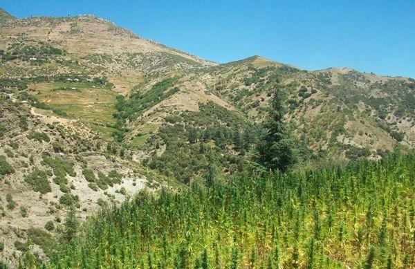 Maroc clandestinite et narcotrafic regnent pa