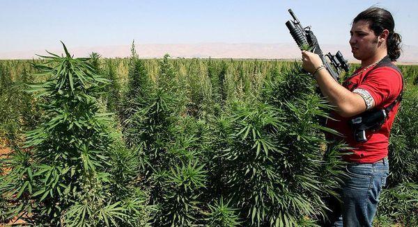 Medio Oriente industria cannabis guerra