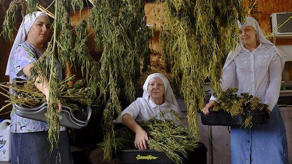 monjas marihuana