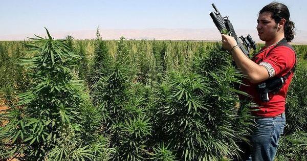 Moyen Orient business cannabis guerre