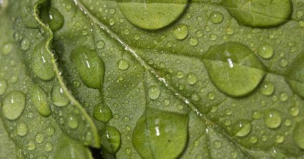 nutrientes cultivo marihuana
