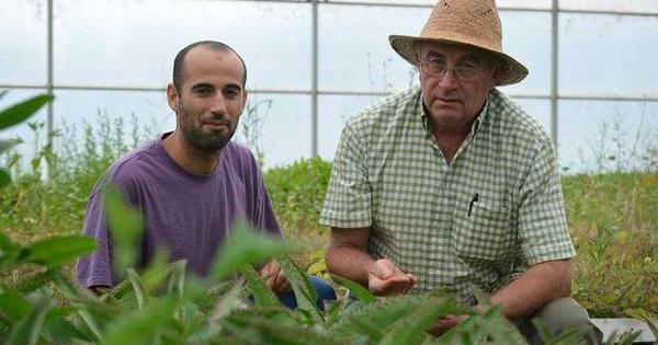 pamies imputato coltivato marijuana malati gr