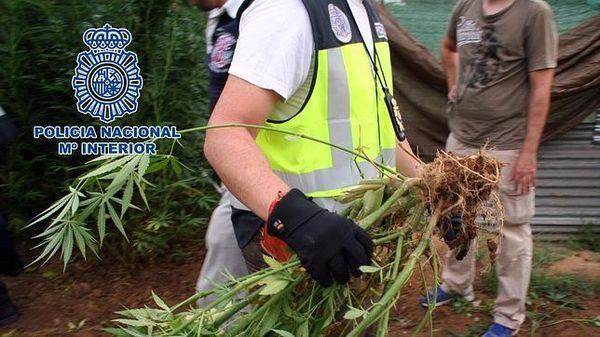 pasos legalizacion marihuana espana